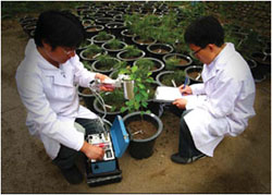 Development and mass propagation of new varieties