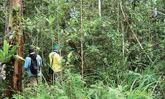 Forest Survey in Kampar