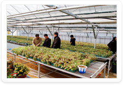Introduction of Examination of New Varieties